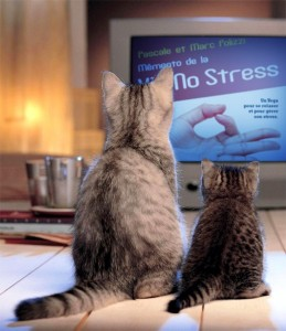 Chats no stress